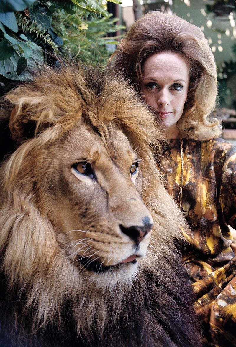 Tippi Hedren at home with her pet lion1971 © 1978 Gene Trindl